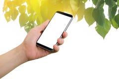 智能手机的人的手举行有在绿色叶子和金黄轻的背景影响的黑屏的 免版税库存照片