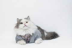 智能猫 图库摄影