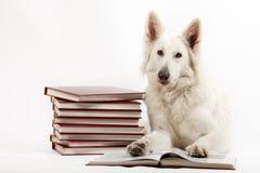 智能的狗 免版税库存照片
