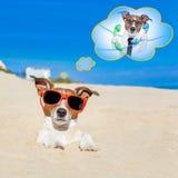 暑假狗 免版税库存照片