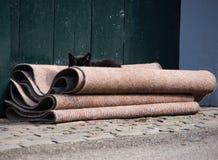 暗中侦察在您的猫 免版税库存照片