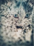 暗中进行的猫 免版税库存照片