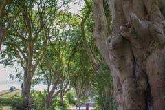 黑暗修筑树篱树特写镜头 库存照片