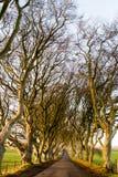 黑暗修筑树篱森林 库存图片
