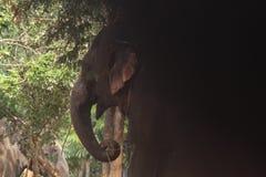 黑暗到光里野生动物大象图片 库存照片
