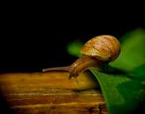 黑暗意想不到的射击上色了飞跃从的蜗牛 库存图片