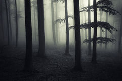 黑暗有神奇雾的被困扰的森林 免版税库存图片