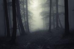 黑暗有雾的被困扰的森林 免版税库存照片