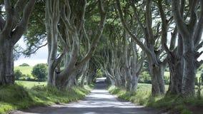 黑暗树篱-北爱尔兰 免版税图库摄影