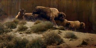 暗淡的水牛 免版税图库摄影