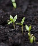 黑暗的地球的小植物 免版税库存图片