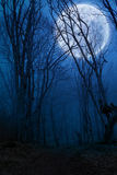 黑暗的夜森林 图库摄影