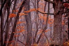 黑暗的有雾的森林在秋天 图库摄影