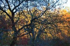 黑暗的木秋天 免版税库存图片