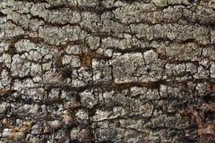 黑暗的木自然本底 免版税库存照片