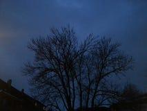 黑暗的树冬天 库存图片