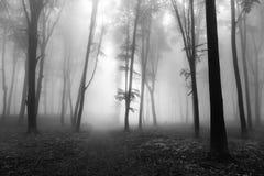 黑暗的树在有雾的森林里 免版税库存照片