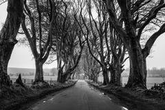 黑暗的树篱隧道 库存图片