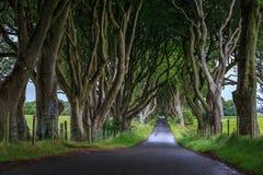 黑暗的树篱,北爱尔兰 免版税库存照片