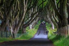 黑暗的树篱,北爱尔兰 免版税图库摄影