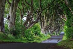 黑暗的树篱,北爱尔兰 图库摄影
