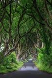 黑暗的树篱,北爱尔兰 免版税库存图片