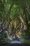 黑暗的树篱,北部Irland 免版税库存照片