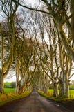 黑暗的树篱, 免版税库存图片