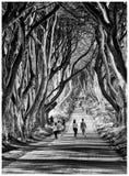 黑暗的树篱, Ballymoney,北爱尔兰 免版税图库摄影
