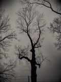 黑暗的树黑色阴影照片 免版税库存图片