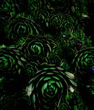 黑暗的样式植物群 库存图片
