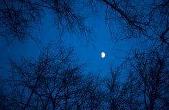 黑暗的桦树木头 免版税图库摄影