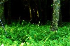 黑暗的森林入口 库存照片