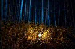 黑暗的森林在晚上由老煤气灯点燃了 免版税库存图片