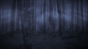 黑暗的森林在晚上 免版税库存照片