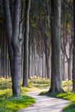 黑暗的森林道路 库存照片