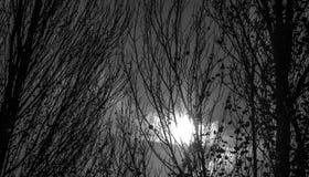 黑暗的森林 库存照片