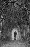 黑暗的步行 免版税库存照片