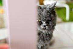 黑暗的猫 免版税图库摄影