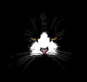 黑暗的猫 免版税库存图片