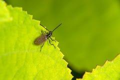 黑暗的甲虫 免版税图库摄影