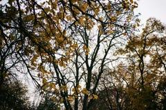 黑暗的秋天 库存图片