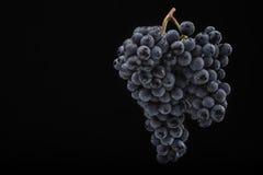 黑暗的葡萄在低灯的在黑色隔绝了背景,宏观射击,水下落 免版税库存图片