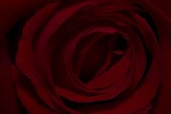 黑暗的葡萄酒红玫瑰背景 免版税库存图片