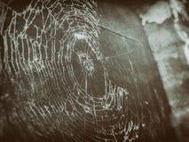 黑暗的葡萄酒蜘蛛网 免版税库存图片