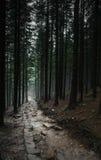 黑暗的道路在森林里 免版税库存图片
