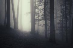 黑暗的道路在被迷惑的黑暗的森林里 免版税库存图片
