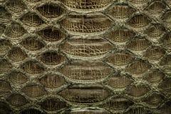 黑暗的金Python皮革,背景的皮肤纹理 免版税库存图片