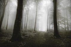 黑暗的雾森林根源可视的结构树 免版税库存图片