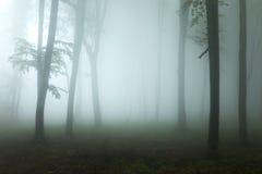 黑暗的鬼的光到大雾的森林里 库存照片
